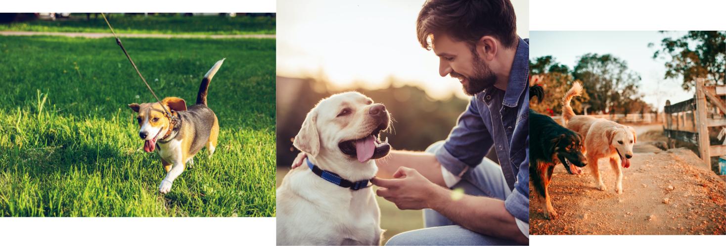gossos disfrutant