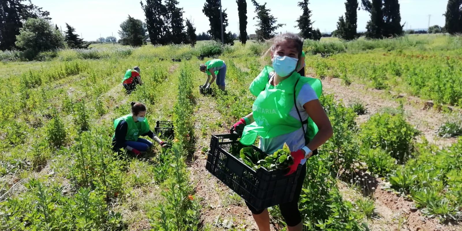 El programa de Gestió Alimentària Responsable de Reus, liderat per la Regidoria de Benestar Social, ha rebut 450 kg de fonoll i 25 caixes...