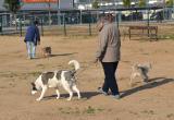 Imatge de ciutadans passejant gossos en una àrea d'esbarjo a Reus