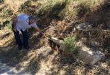 Imatge de la pedra fita al lloc on la van localitzar tècnics municipals de Medi Ambient. Foto: F. FERNÁNDEZ / MUSEUS DE REUS