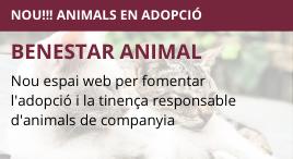 Accedeix a Nou espai web d'adopció d'animals