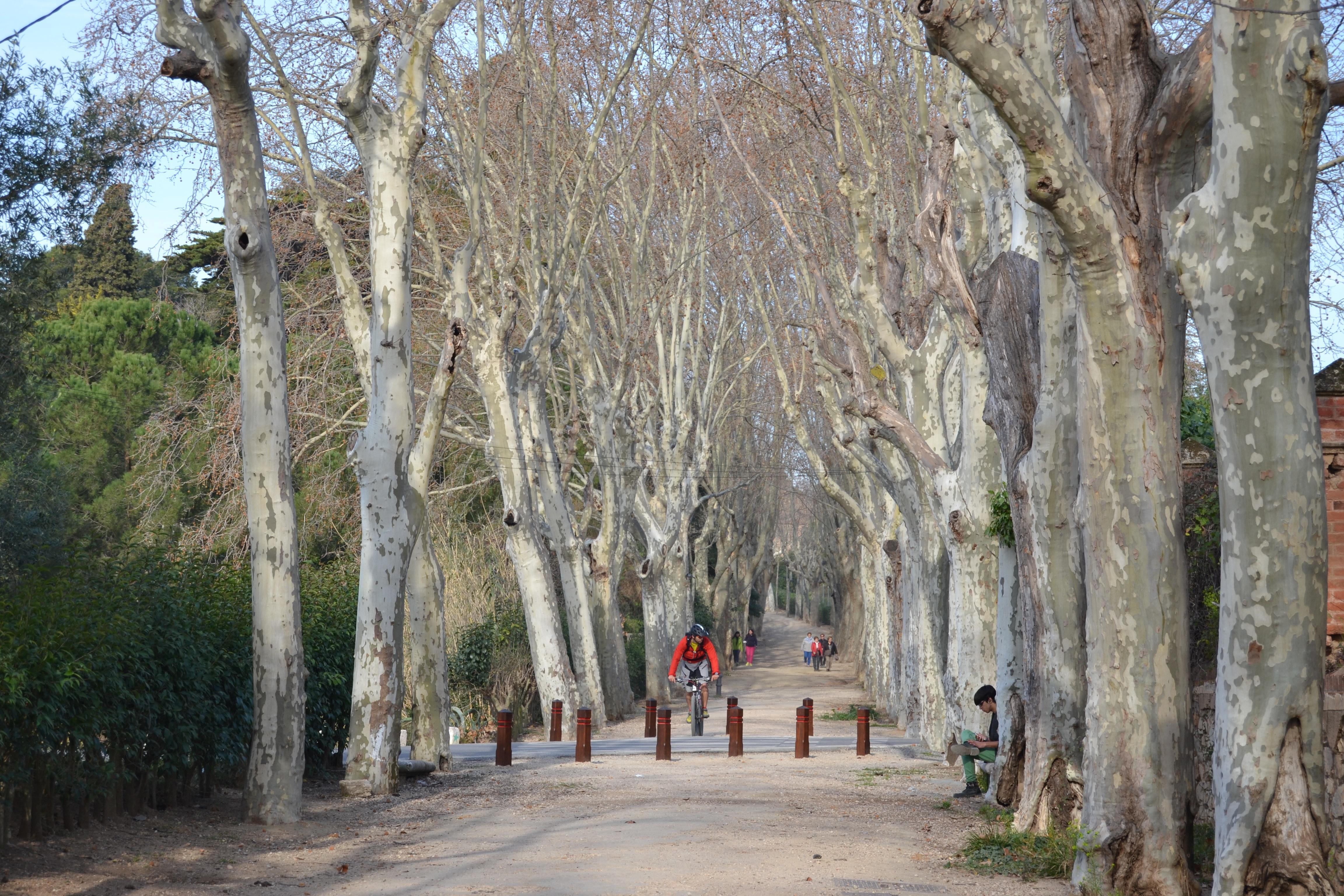 Visita al Passeig Boca de la Mina