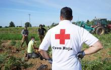 Creu Roja espigolada