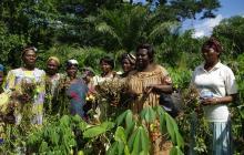 Projecte d'Agermanament Sense Fronteres al Camerun